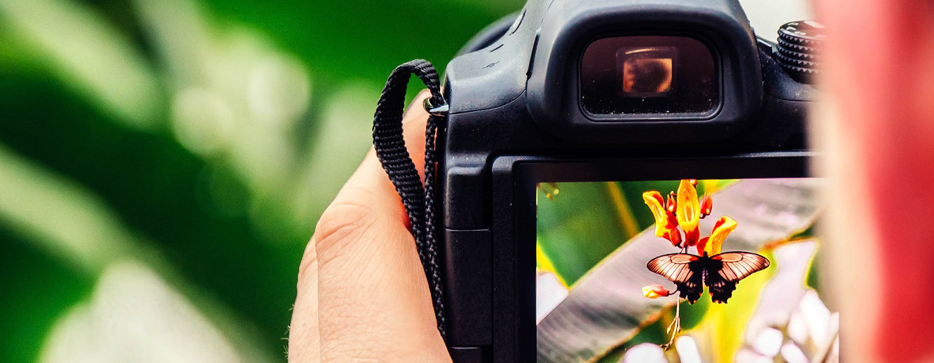 A person takes a photograph of a black and orange butterfly drinking nectar from a flower using a digital SLR camera.