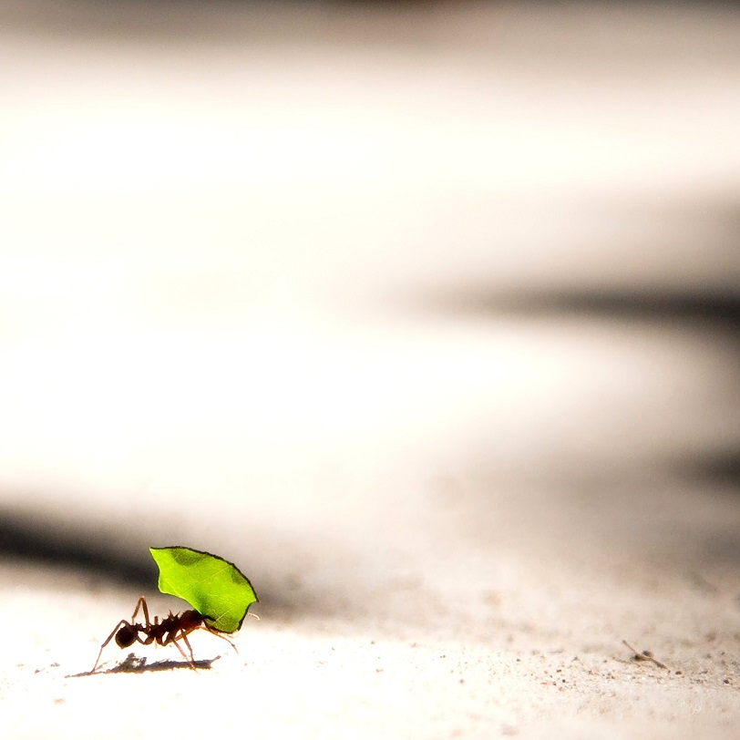 An ant carrying a leaf, even the smallest gesture makes a big difference